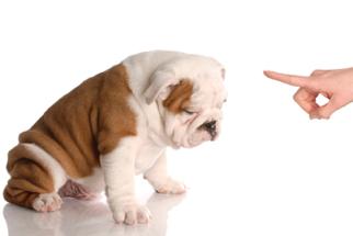 Como ensinar o comando 'não' para filhotes?
