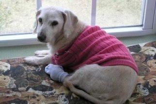 Cúrcuma no combate à artrite canina