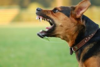 Saiba lidar com o medo e agressividade em cães