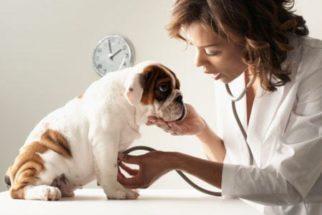 Conheça o serviço de plano de saúde para cachorros