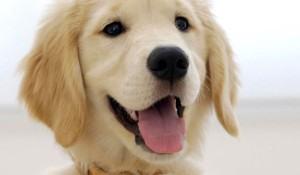 sugestoes-de-nomes-para-cadelas