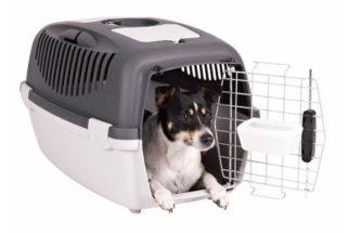Uso de caixa de transporte de cachorro em casa