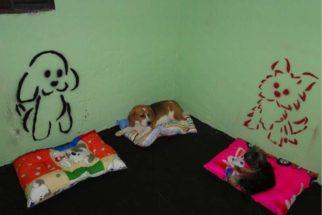 Aprenda a organizar um quartinho para seu cachorro