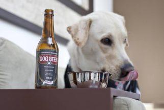 Já ouviu falar da cerveja para cachorro?