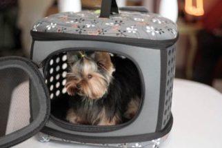 Como escolher uma caixinha de transporte pro meu cão