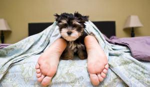 dormir-junto-com-seu-dog-pontos-positivos-e-negativos