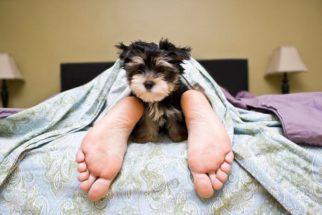 Dormir junto com seu dog: sim ou não?