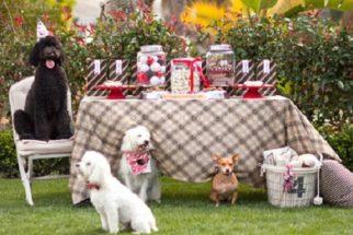 Festas para cães: confira como organizar direitinho