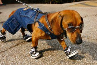 Moda para cachorro: O que é saudável e o que não é?