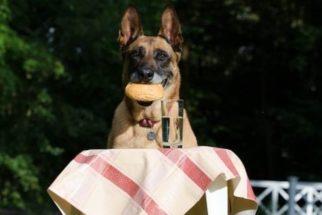 O que ocorre quando o cão está sem querer comer?