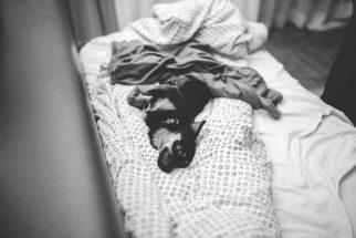 Saiba como acostumar o cão a uma nova cama
