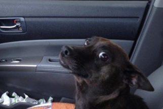Fotos: Confira a reação de cães indo ao veterinário