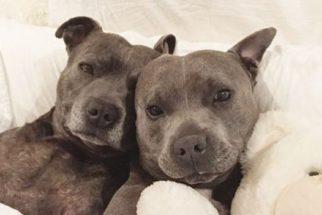 Apaixone-se por esses dois irmãos que estão bombando no Instagram