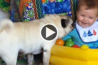Bebê brincando com filhotes se torna a 'fofura' da internet