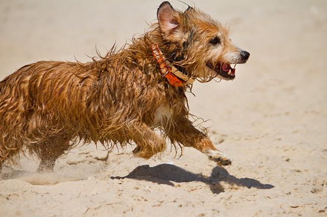 """O cão fica animado após o banho por diversos motivos mas nem sempre é por """"alegria"""""""
