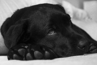 Cachorro com gases: o que fazer?
