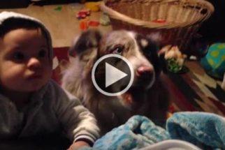 Cachorro se adianta ao falar 'mama' antes de bebê