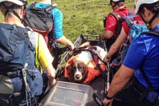 Cão sobrevive após queda de penhasco de 200 metros enquanto brincava
