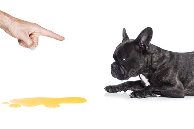 Xixi de cachorro no chão