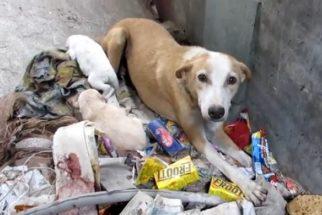 Ferida gravemente, cadela abandonada com filhotes é salva por ONG