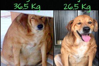 Cachorro obeso tem transformação incrível
