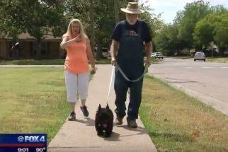 Cão salva dono idoso após assalto seguido de agressão
