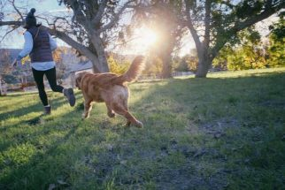 Aprenda como evitar que seu cachorro fique pulando nas pessoas