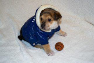 Cuidados com os cães durante o inverno