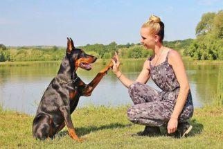 Cumprimentos educados com a pata: ensine ao cão