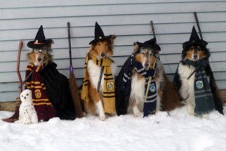15 cães fantasiados do 'bruxinho' Harry Potter