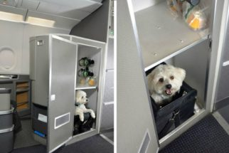 Empresa aérea inova e cria 'primeira classe' para bichos de estimação