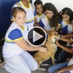 Escola adota cães para ensinar sobre cuidados e respeito com os animais