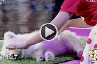 Garotinha usa 'poderes especiais' para fazer animais dormir