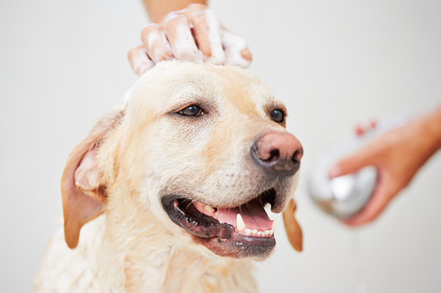 Os cães precisam tomar banho de forma regular