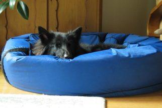 Itens essenciais para receber um novo cão em casa