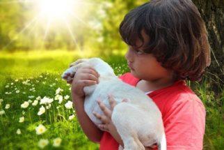 Luto em crianças: Como ajudá-las a lidar com a perda do amigo pet