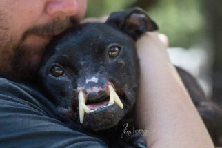 Mesmo após sofrer abusos, cadela mantém o espírito feliz