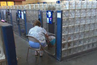 Mulher conforta cães de abrigo lendo histórias infantis