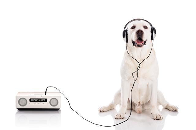 A música clássica é considerada anti-estresse, sonífera e tranquilizante