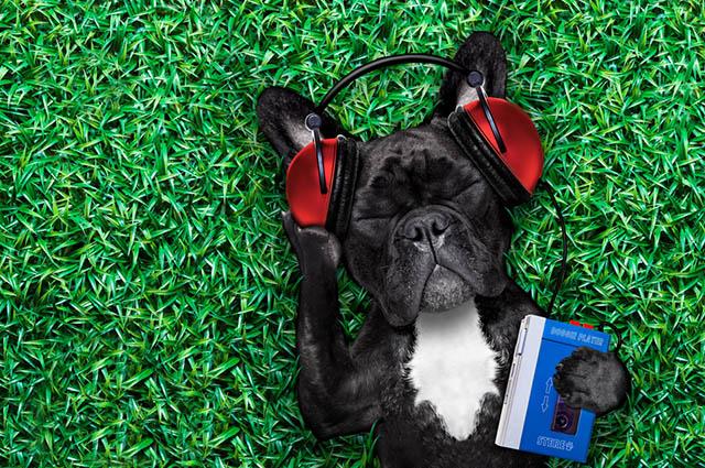 Existem músicas para cachorros e elas servem para diminuir estresse e aumentar a concentração dos pets