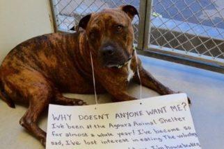 Sem lar, cão faz 'greve de fome' e consegue ser adotado