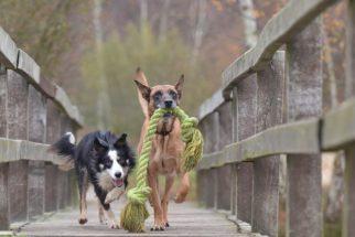 Transformando o cão travesso em comportado