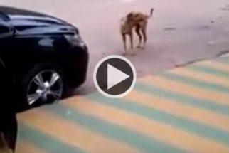Vídeo de cachorro 'dançando' gera polêmica na internet