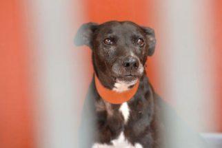 À espera de adoção, cadela está há 11 anos em canil