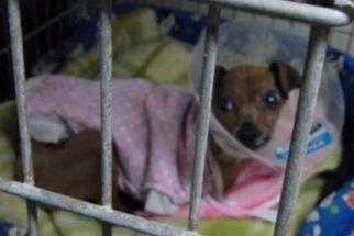 Após 12 anos presa em gaiola, cadela finalmente experimenta a liberdade