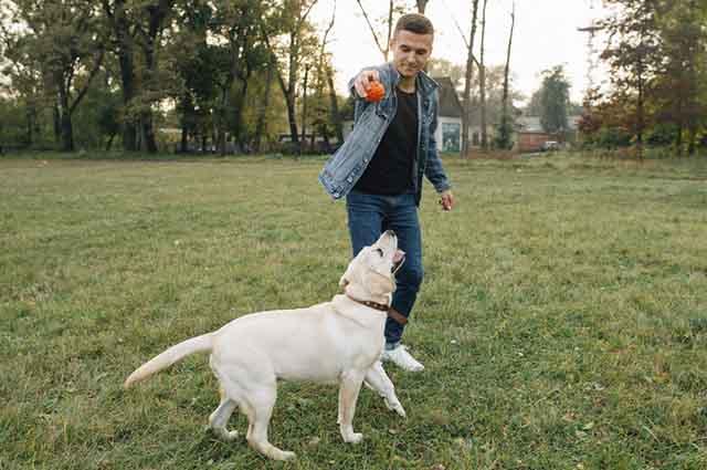 Quando o cachorro brinca com você ele está demonstrando seu amor