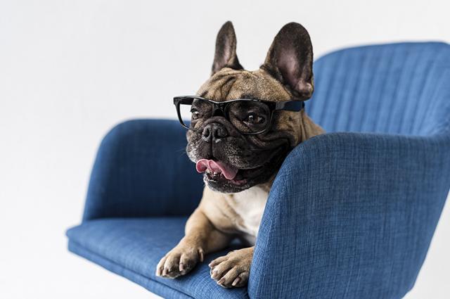 A atrofia progressiva da retina em cães é uma doença ocular causada por falhas genéticas