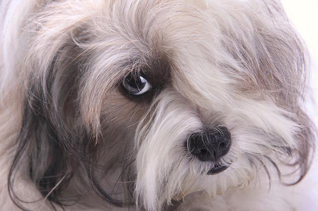 Uma das causas para a queda dos pelos dos cachorros é a alergia