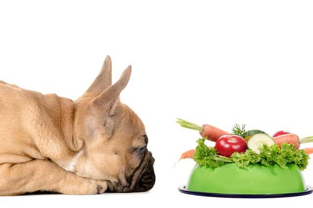 As frutas, legumes e verduras podem compor a alimentação do pet desde que em forma de complemento