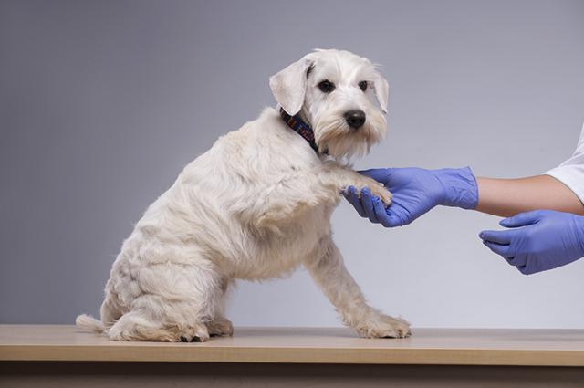 Desparasitar o cão e o local onde ele vive é uma aposta para eliminar a frequência das lambidas